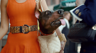 2014 Audi Super Bowl Commercial Doberhuahua #StayUncompromised