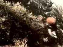 1998 MILLER LITE – Evil Beavers