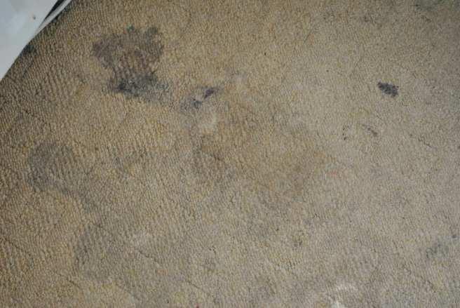 Carpet cleaner vax