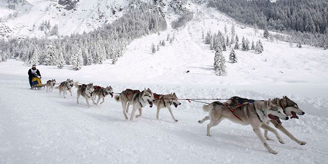 Iditarod 03