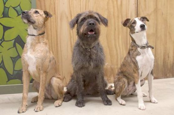 Monty, Ginny y Porter, un súper equipo