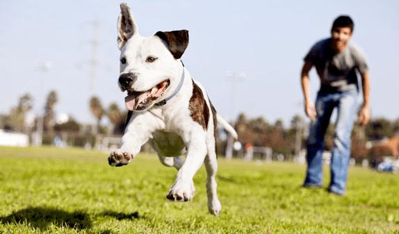 8 secretos para educar a tu perro