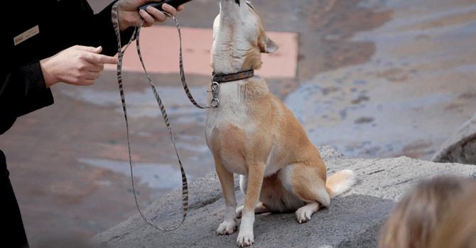 Los Perros Cantan