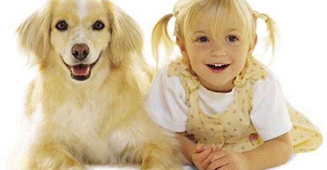Comunicación: Perro-humano
