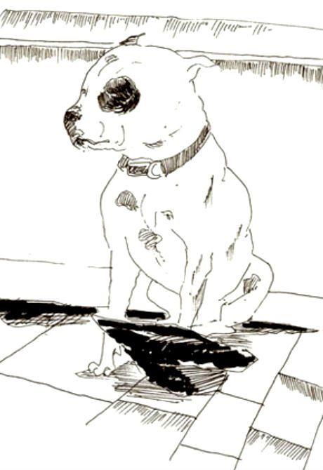 El perro que cambió mi vida