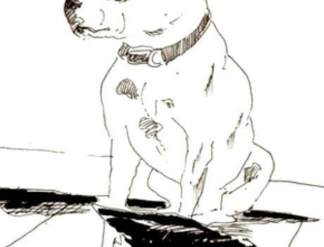 John Dolan Dog 1
