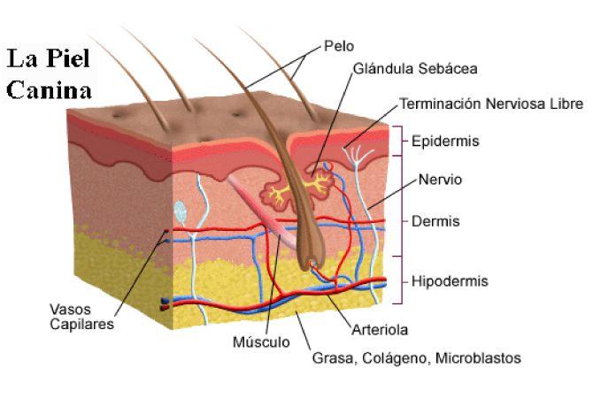 ¿Qué es el pH de la piel?