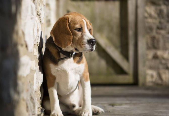 10 razones por las que cruzar a tu perro no es buena idea