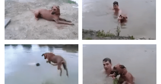 Salva Dueño