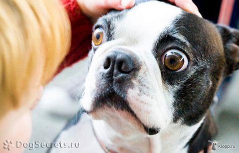 10 Cosas Que Estresan A Tu Perro
