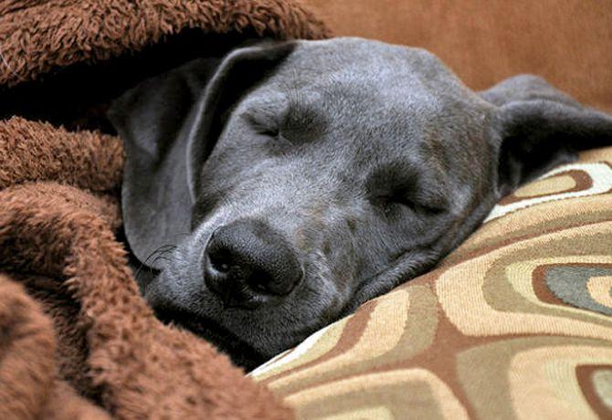 ¿Puedo contagiar de gripe o resfriado a mi perro?