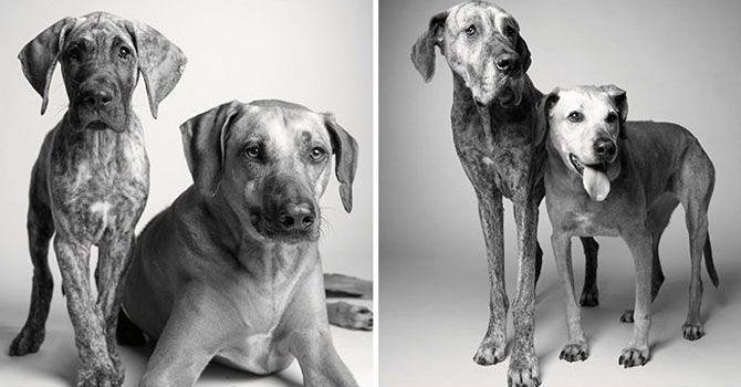 El Paso Del Tiempo En Nuestros Super Cachorros