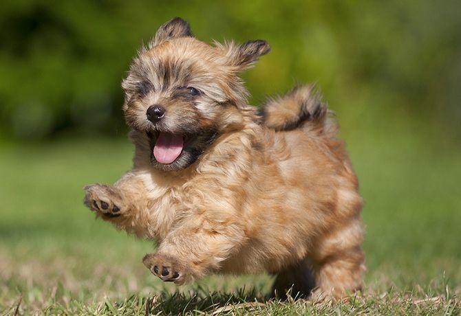 6 tips para que tu cachorro crezca sin agresividad.