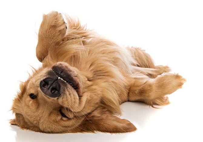 ¿Cómo ayudar a tu Super Cachorro a que se relaje?