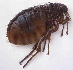 flea-columbus-ohio