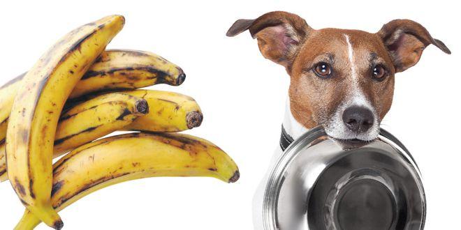 Bocadillos de plátano macho