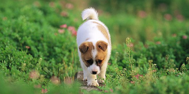 Prueba Los Sentidos De Tu Cachorro