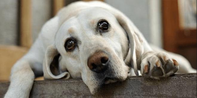 7 Cosas Que Entristecen A Tu Perro