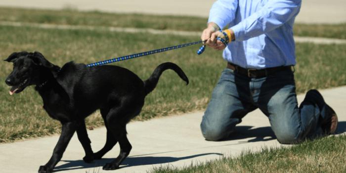 Problemas En El Paseo Con Mi Perro