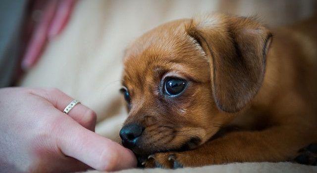 Mi Super Cachorro Crece, ¿qué Debo Esperar?
