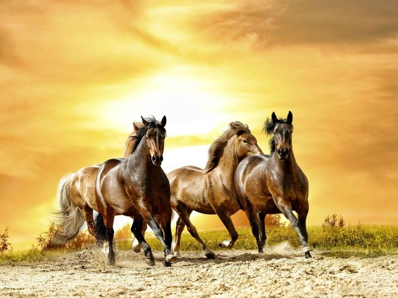 صور خلفيات خيول عربية اصيلة واجمل احصنة في العالم Hd سوبر