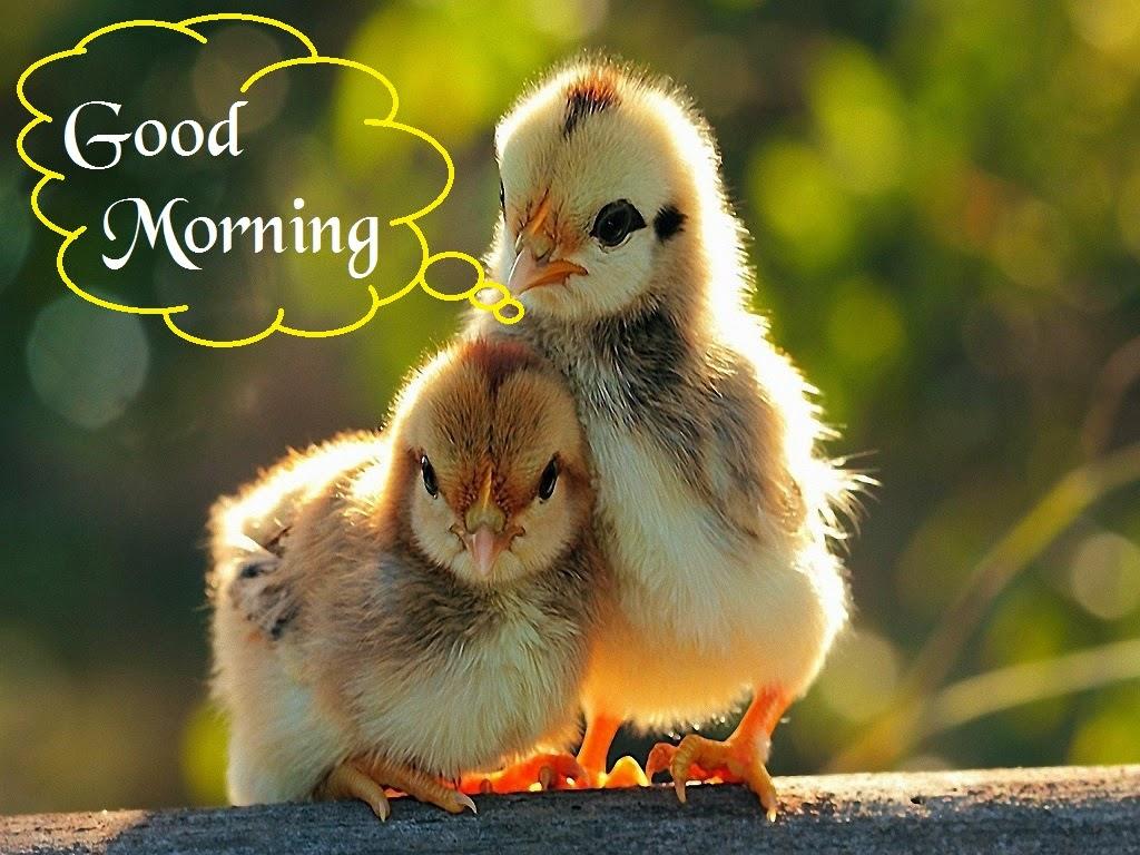Cute Baby Wallpapers With Nice Quotes صور صباح الخير Good Morning صور مكتوب عليها صباح الخير
