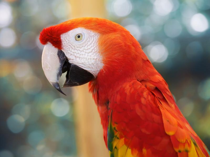 Colorful Animal Wallpaper صور ببغاء جميلة احلي الوان ببغاوات وخلفيات بغبغان سوبر كايرو