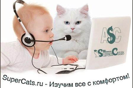 asc webinars