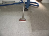 Why You Need Professional Carpet Cleaning Services?
