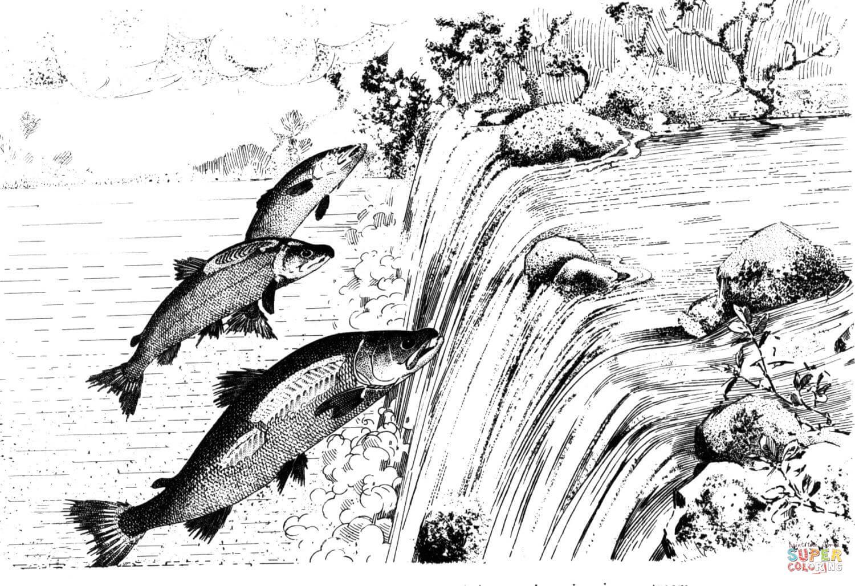 Salmon Swimming Upstream Cartoon Sketch Coloring Page