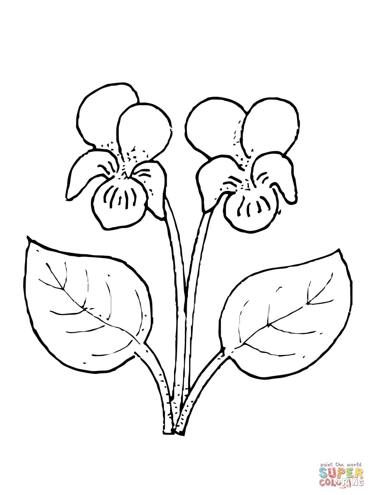 How To Draw A Violet Flower : violet, flower, Violet, Flower, Coloring, Printable, Pages