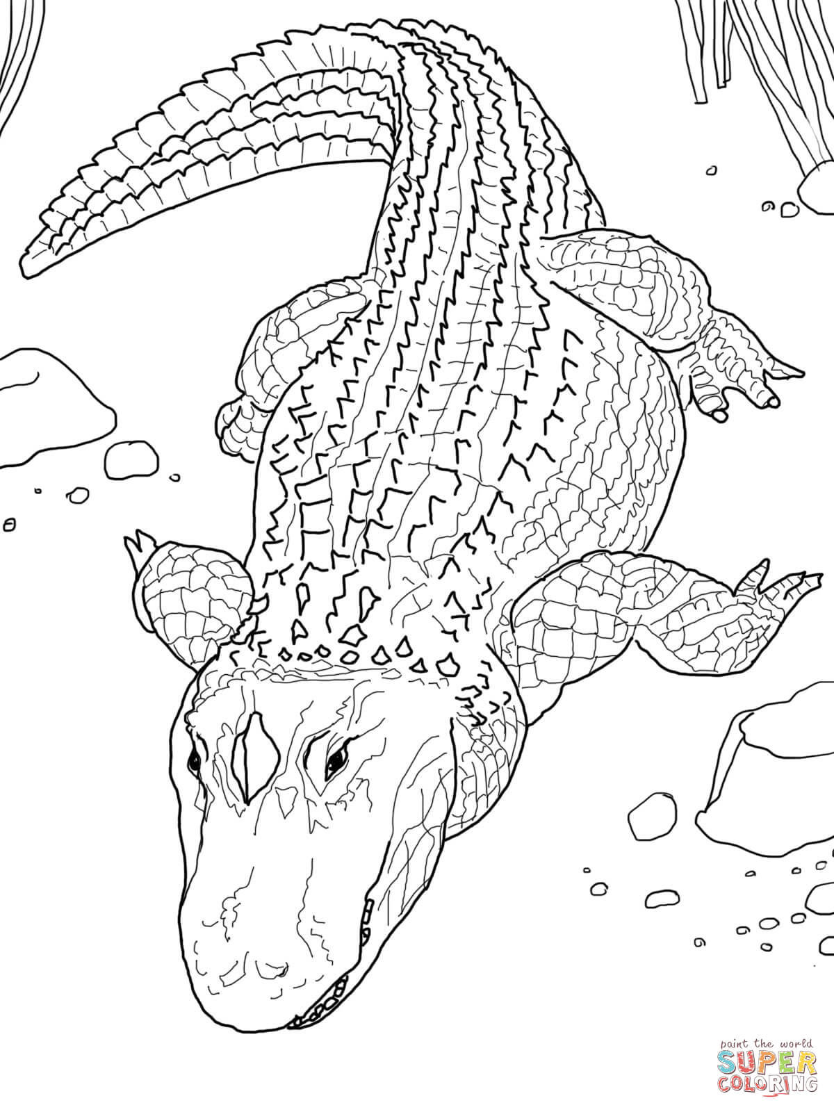 Realistic Alligator Drawing : realistic, alligator, drawing, American, Alligator, Common, Coloring, Printable, Pages