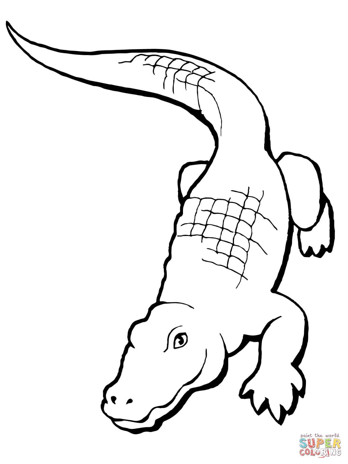 Realistic Alligator Drawing : realistic, alligator, drawing, Realistic, Alligator, Coloring, Printable, Pages