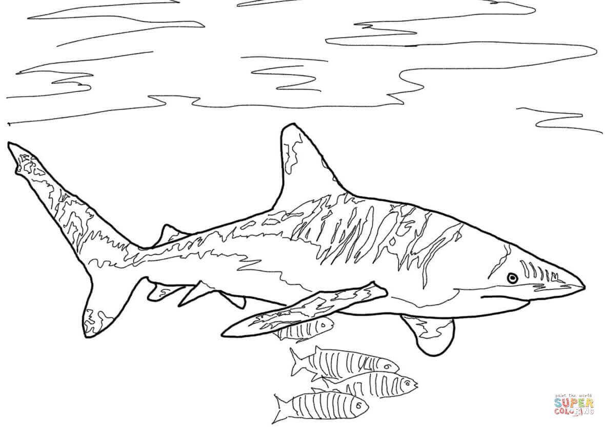 Mako Shark Chasing A Fish Coloring Page Mako Shark Clipart Tribal