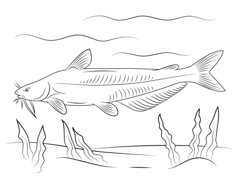 Blue Catfish Coloring Page Free Printable Pages Sketch