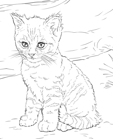 Baby Kitten Coloring Pages : kitten, coloring, pages, Kitten, Coloring, Printable, Pages
