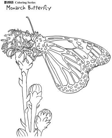 11 Cool Monarch butterfly Coloring Pages Photos - Coloring