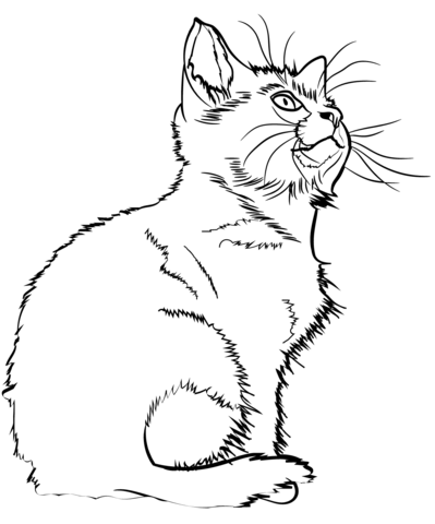 Free Printable Kitten Coloring Pages : printable, kitten, coloring, pages, Kitten, Coloring, Printable, Pages