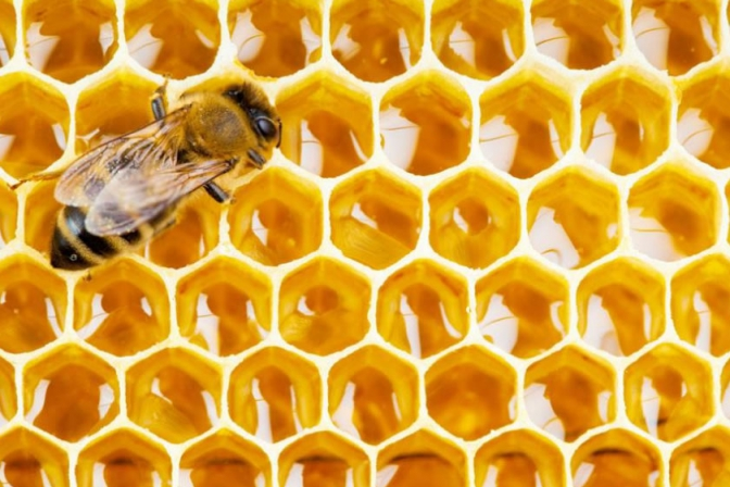 Supercritical CO2 extraction of propolis active ingredients
