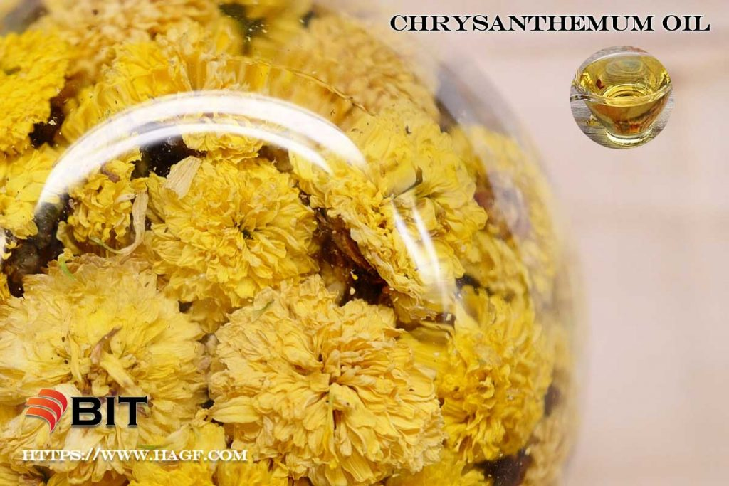 Supercritical CO2 Extraction of Chrysanthemum Oil