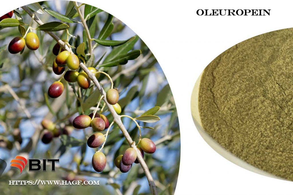 Supercritical CO2 Extraction of Oleuropein