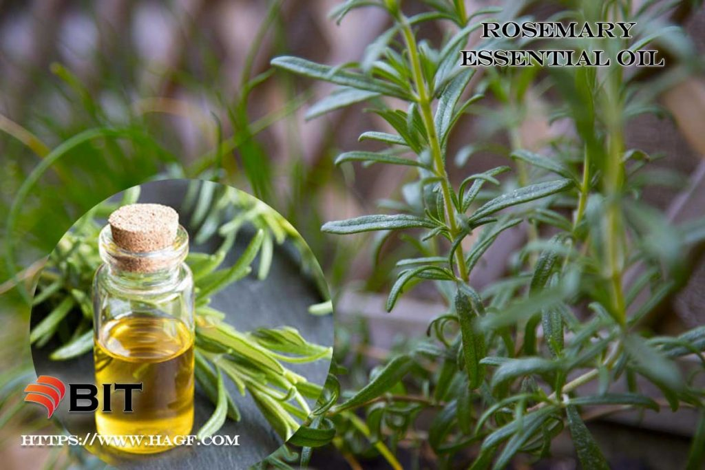 supercritical carbon dioxide extraction of rosemary essential oil