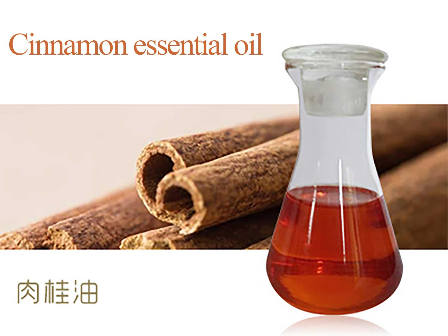 cinnamon essential oil of supercritical co2 extraction