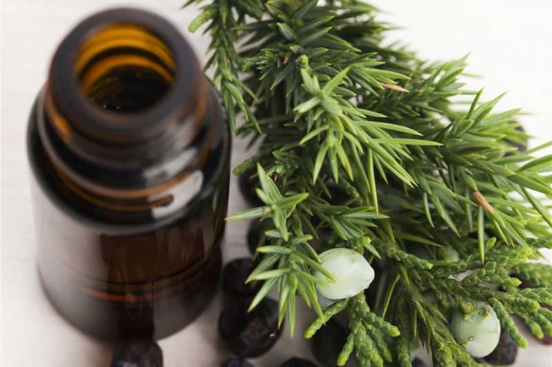 juniper berry oil by supercritical CO2 extraction