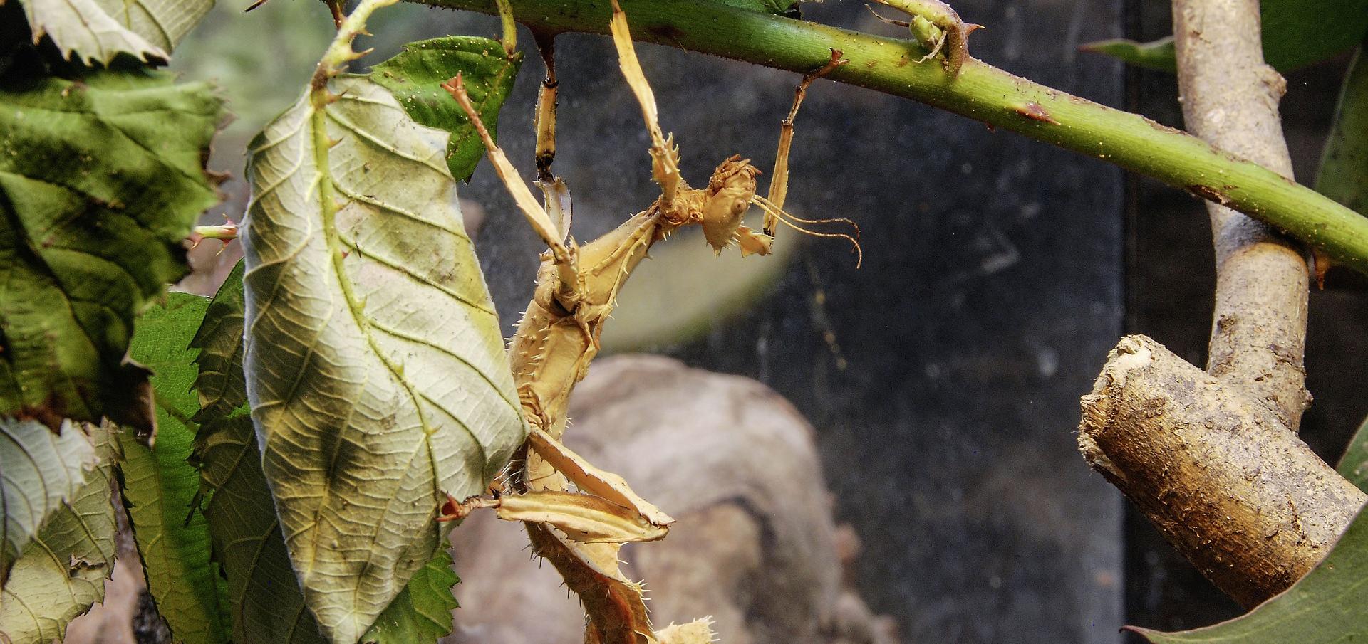 10 insectos raros que parecen criaturas extraterrestres