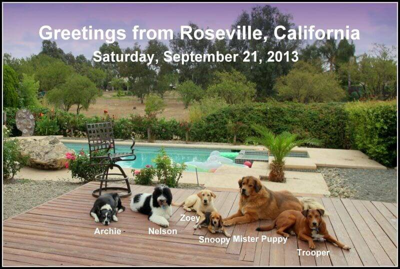 DOGGIE BOOT CAMP SEND AWAY KENNEL TRAINING SACRAMENTO