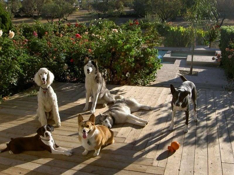 sacramento service dogs