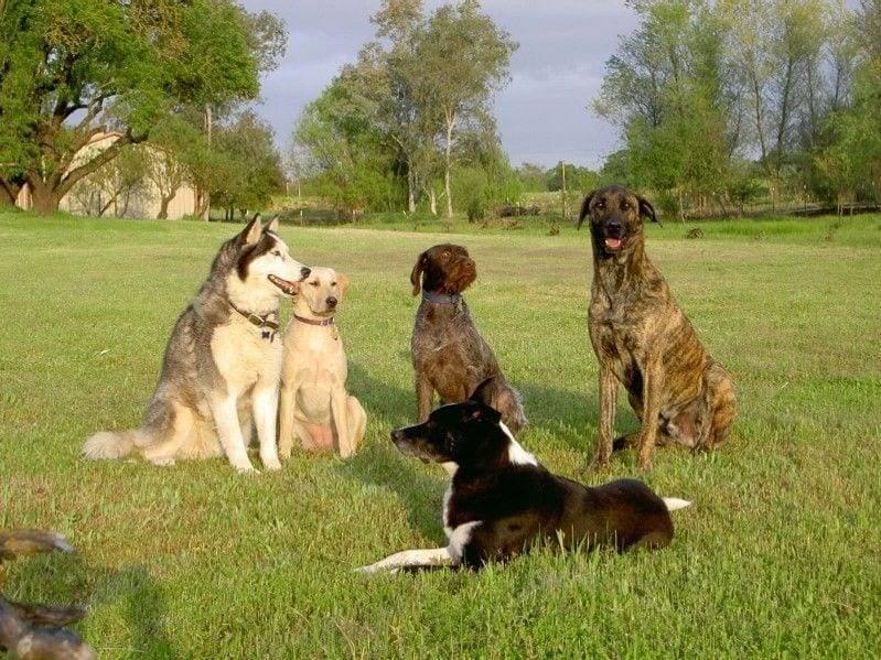 Dog training con artists
