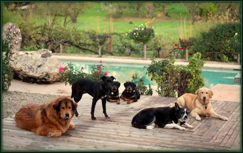 dog boot camp sacramento