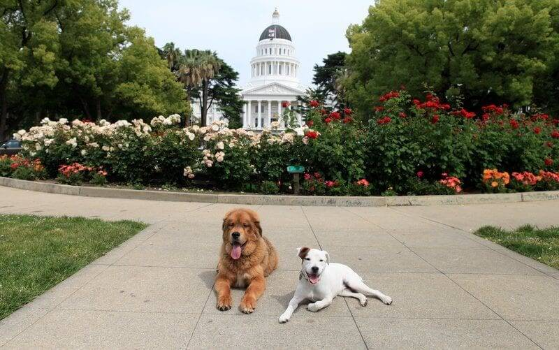 california service animals